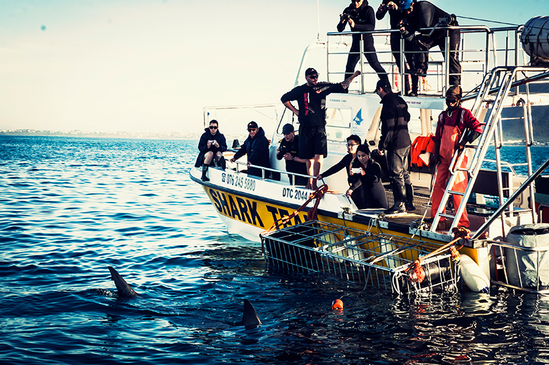Gansbaai_Shark_Cage_Diving_03